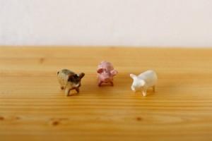 ここのきで見つけた豚ちゃん