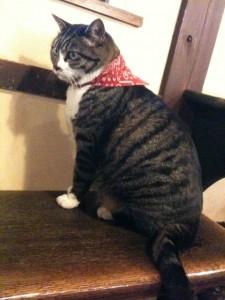 山みず木の看板猫さん